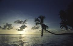 dusk holiday palm tree pigeon point sea sunset - stock photo