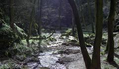 Forest river landscape water dliches nieder Stock Photos