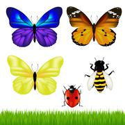 butterflies and insect set - stock illustration