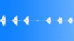 wren singing - sound effect