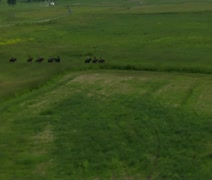 Aerial shot of cowboys in Green Valley Stock Footage