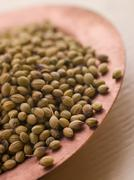 Dish of Coriander Seeds - stock photo