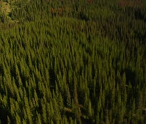 Aerial shot of forest and mountains with dead trees Stock Footage