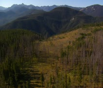 Aerial shot of forest and mountains with dirt road Stock Footage