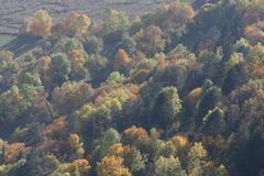 autumn forest landscape season dliches nieder - stock photo