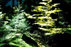 autumn forest idyll mood tree mystic landscape - stock photo