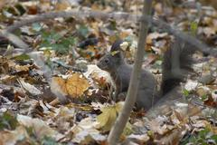 Stock Photo of autumn forest sch nbrunn zoo squirrel animal