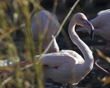 Flamingo sch nbrunn zoo animal bird hietzing 13 Stock Photos