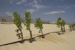 aridity desert irrigation vegetation plants in - stock photo