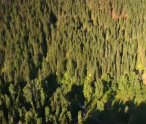 Aerial shot of forested canyon Stock Footage