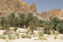 ain khudra desert mountain oasis landscape sinai - stock photo