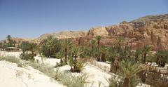 ain khudra desert oasis landscape sinai egypt - stock photo