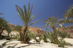 tree ain khudra desert oasis palm landscape asia - stock photo