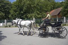 Horse carriage horsedrawn vehicle lippizaner Stock Photos