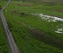 aerial shot of cowboys and horses in Green Valley - stock footage
