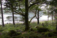Forest green lake moss mossy forestry landscape Stock Photos