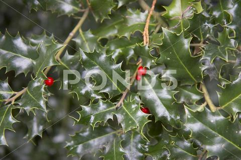 Stock photo of leaf berry leaves part plant vegetation zurich