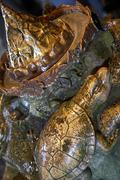 Fountain golden hellbrunn sight water trick Stock Photos