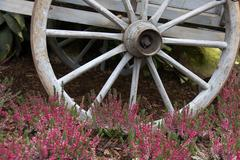House technology autumn color palm palmenhaus in Stock Photos