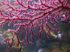 Coral pink sea fan animal component depict Stock Photos