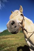Horse standing outdoors in scenic location (fisheye) - stock photo