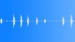 Eastern phoebe Sound Effect