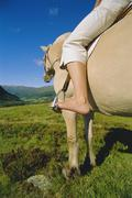 Woman outdoors riding horse in scenic location - stock photo