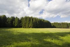 Stock Photo of forest meadow naturpark hochmoor schrems nieder