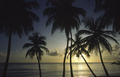 palm tree pigeon point sea silhouette sunset - stock photo