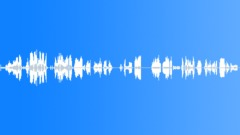 Beluga whales vocalization Sound Effect