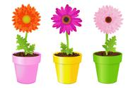 Colorful daisies in pots Stock Illustration