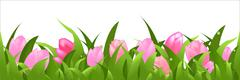 Tulips panorama Stock Illustration