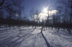 winter forest park snow forestry season sky - stock photo