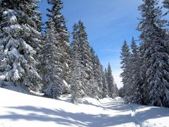 Nature winter cold natural landscape snow in Stock Photos
