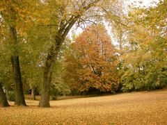 Stock Photo of leaf autumn color calm city park colour end
