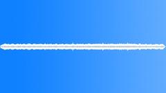 guatemalan cicada cocolito - sound effect