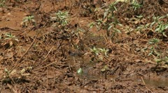 Dead frog in dirty water Stock Footage