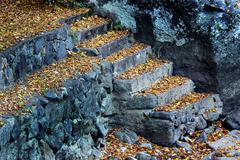 Stock Photo of leaf autumn color colour creature end eventide