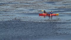 Kayakers lounge in a kelp bed on the sea Stock Footage