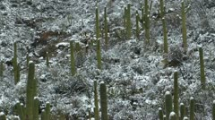 Arizona Desert Snow Scenic Stock Footage