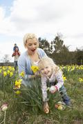 family on easter egg hunt in daffodil field - stock photo