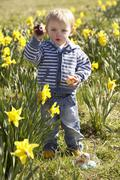 Young boy on easter egg hunt in daffodil field Stock Photos