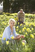 Woman hiding decorated easter eggs for hunt amongst daffodils Stock Photos