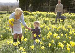 young family walking amongst spring daffodils - stock photo