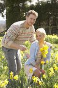 Romantic couple picking spring daffodils Stock Photos