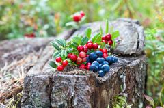 Wild berries on a green vegetative background in the forest Stock Photos