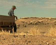 Farmer on his farm with sheep and sheep dog, Australia Stock Footage