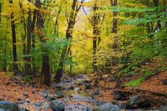autumn woods and creek - stock photo