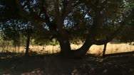 Driving through  California wine country Stock Footage