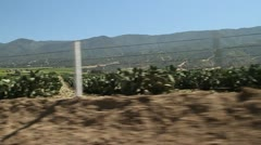 Driving through cactus farm Stock Footage